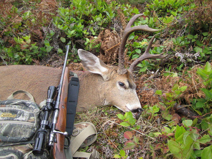 Image of a Washington blacktail deer taken with a Browning 30.06
