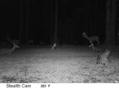 Infrared trail camera flash