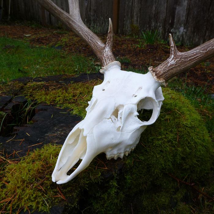 skull_mount3