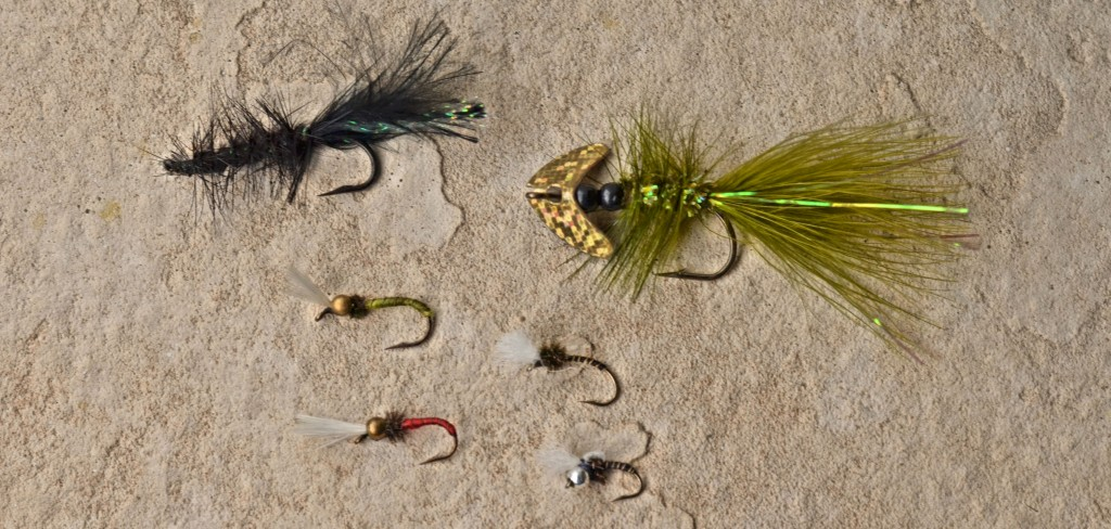 The whooly bugger, Mack's Smile Blade Fly, and Chironomids are productive flies for trout -Jason Brooks