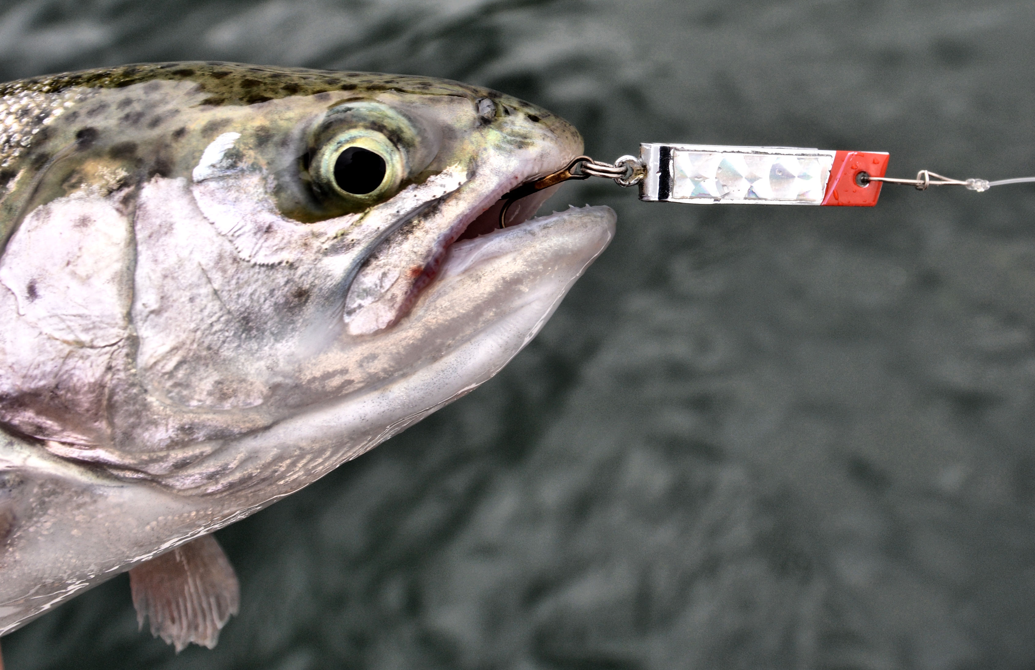 Best rainbow trout lures for Super duper fishing lure