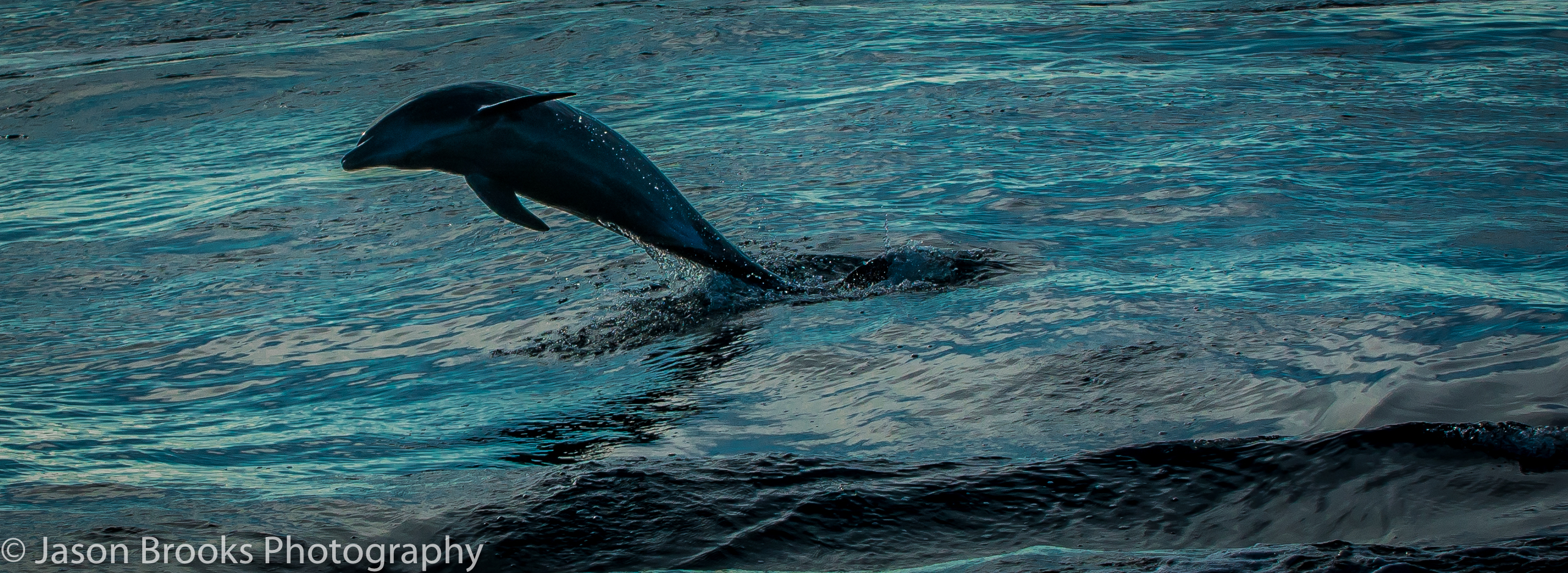 Dolphins often race alongside the boat on the way to the fishing grounds-Jason Brooks
