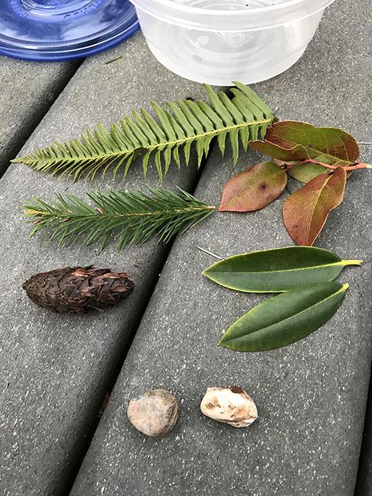 pine_cones_web
